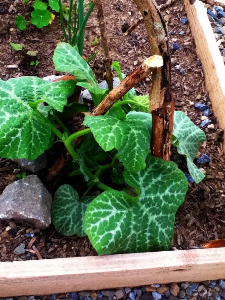 Growing Cucumbers From Seed In A Wild And Windy Galway Garden