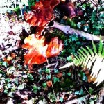 Wild mushrooms. Image of wild mushrooms