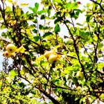 World food day. Image of apple tree