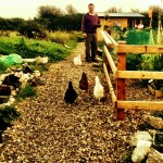 free range chickens. Image of man and chickens